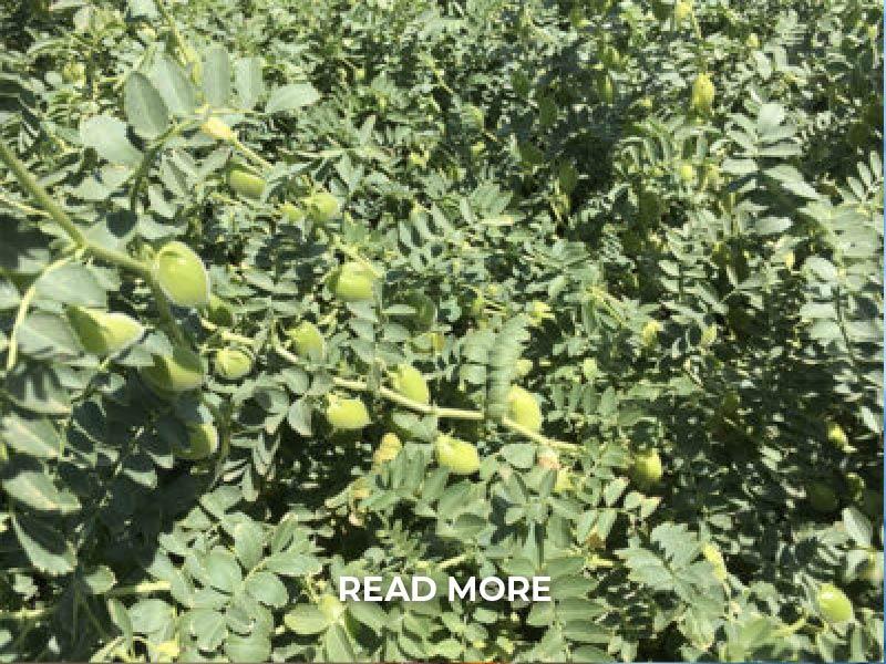 Kennedy Produce Eggplant RM-01